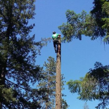 TT Tree Service